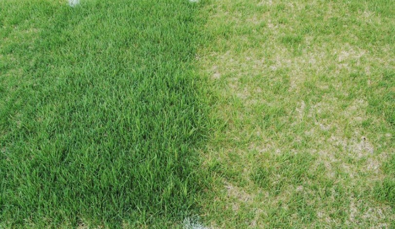 Overseed Lawn