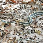 Best Snake Repellent for Yard, Garden & Home