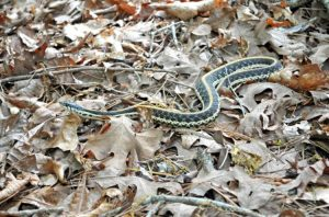 Best Snake Repellent for Yard, Garden & Home