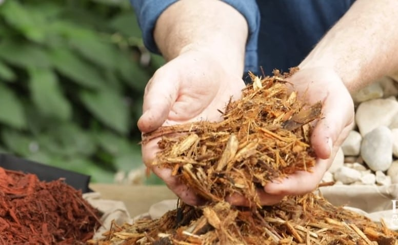 Choosing the Right Mulch for Vegetable Gardens