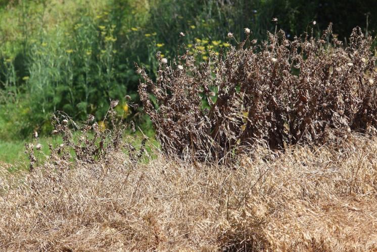 How Long Does It Take for Vegetation Killer to Work?
