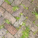 How to Prevent Grass from Growing between Pavers?
