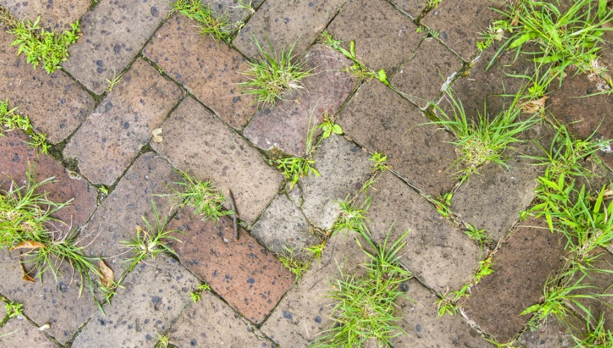 How to Prevent Grass from Growing between Pavers