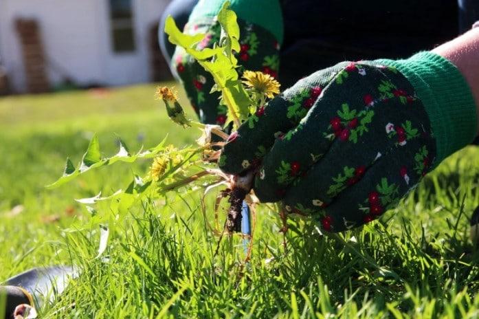 Hand-Weeding