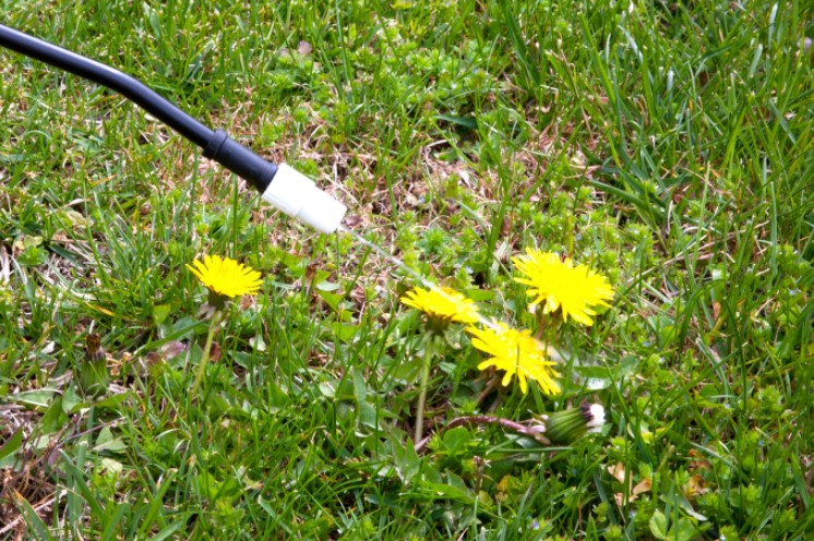 Using Herbicides to kill Weed
