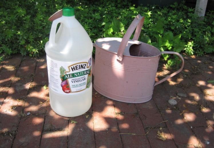 Using Vinegar to kill Grass
