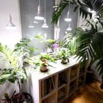 The Best Grow Lights For Your Indoor Plants