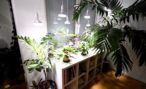 The Best Grow Lights For Your Indoor Plants