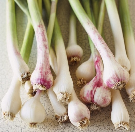 Health Benefits of Spring Garlic