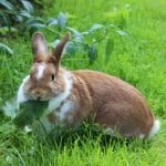 How to Keep Rabbits From Eating Plants?