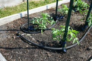 How to Use Soaker Hose in Vegetable Garden?