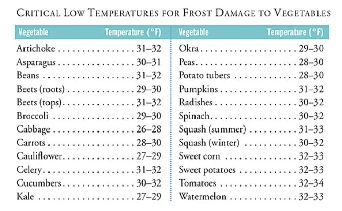 What Temperature Causes Frost Damage to Plants?