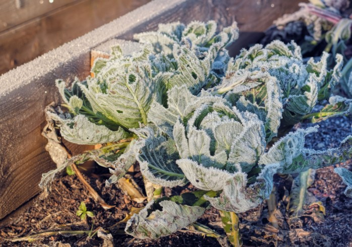 How Does Frost Affect Plants?