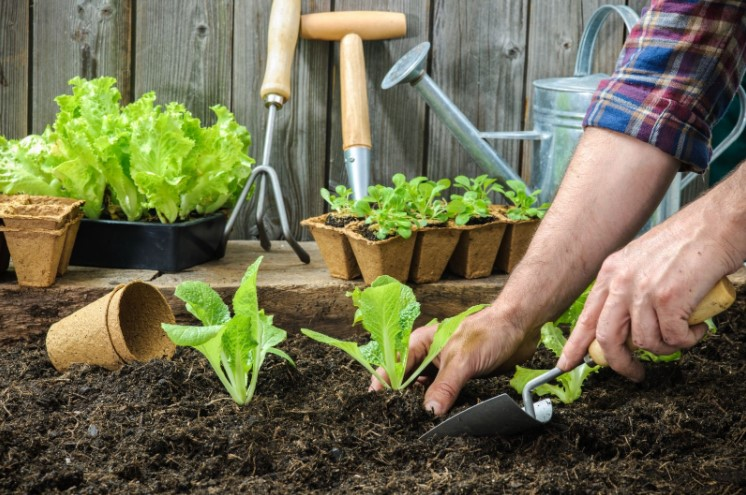 Organic Soil Amendments For Your Vegetable Garden