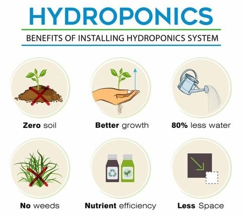 The Benefits of Using Hydroponics