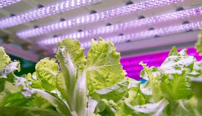 Grow Lights for Indoor Plants