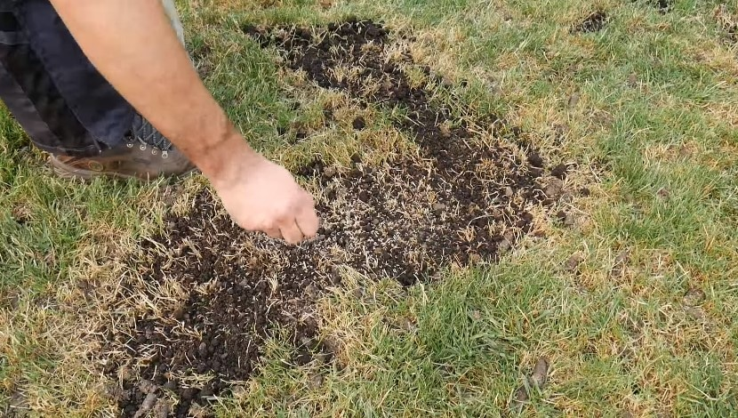 How to Plant Grass Seed on Existing Lawn