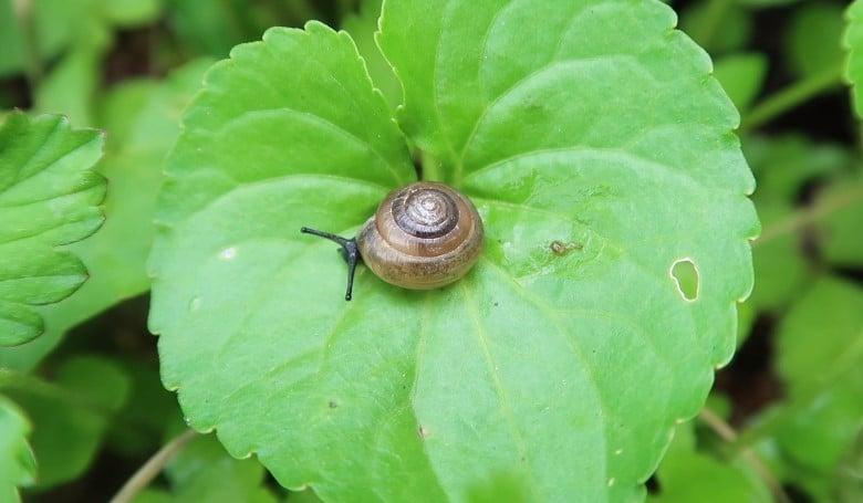 Snail-Resistant Plants