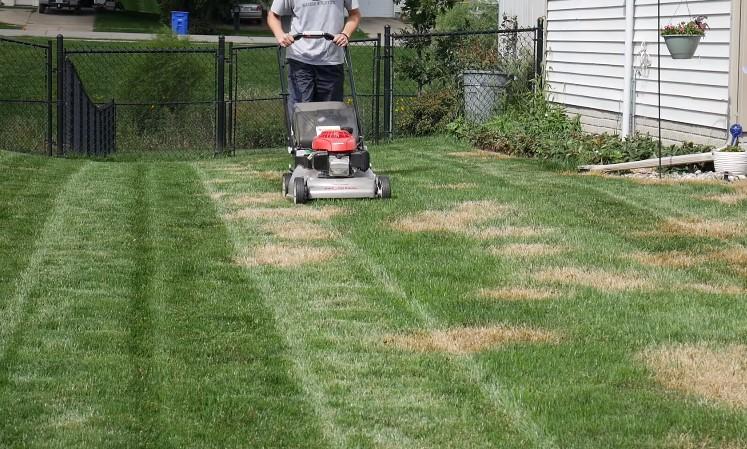 mow grass