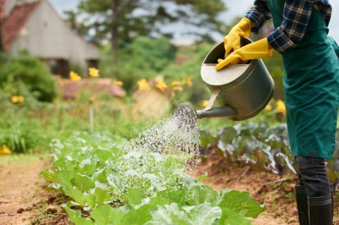 15 Ways to Save Water in Your Garden