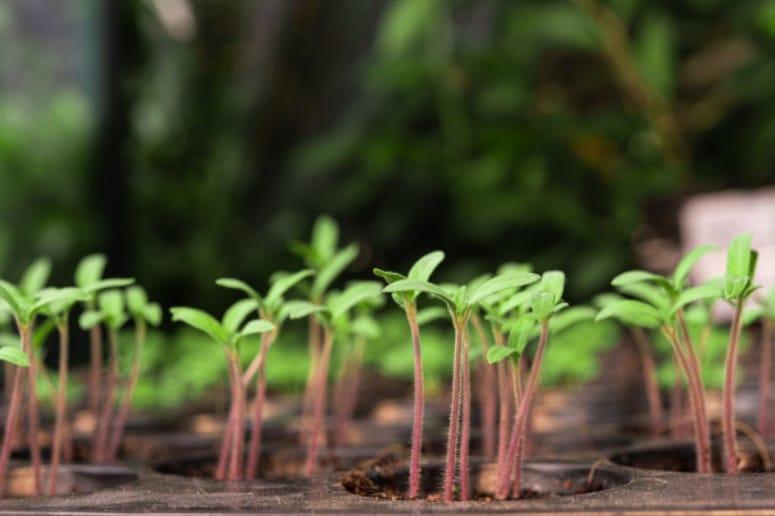 9 Reasons Why Are My Seedlings Growing So Slow