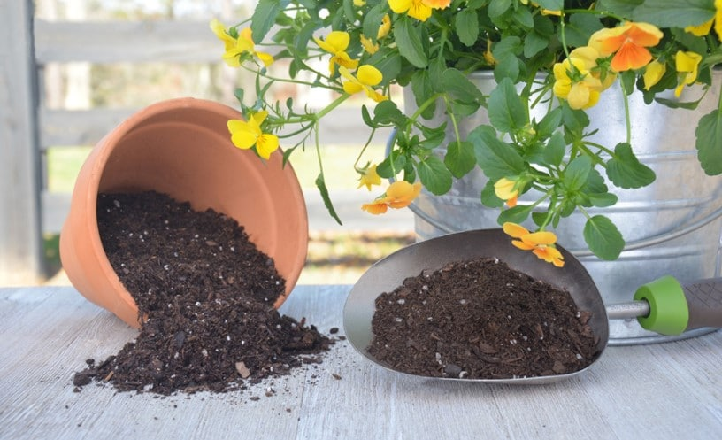 When to Use Potting Soil?