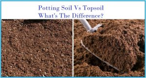 What is the Difference Between Potting Soil and Topsoil?