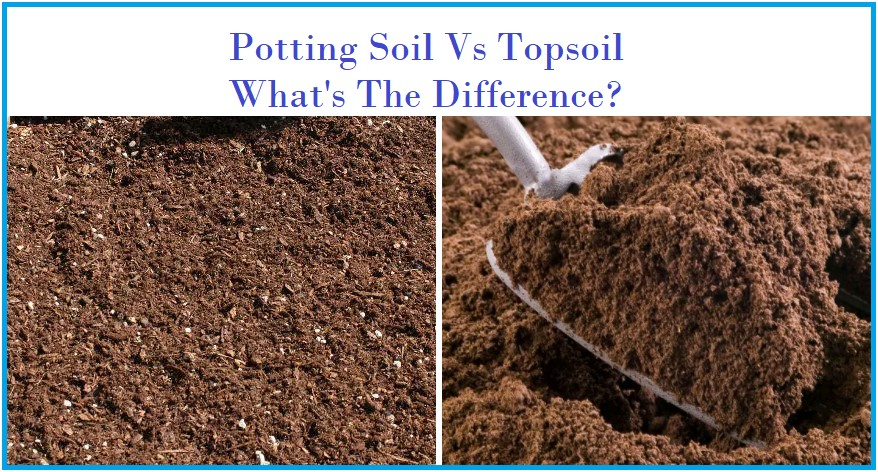 What is the Difference Between Potting Soil and Topsoil