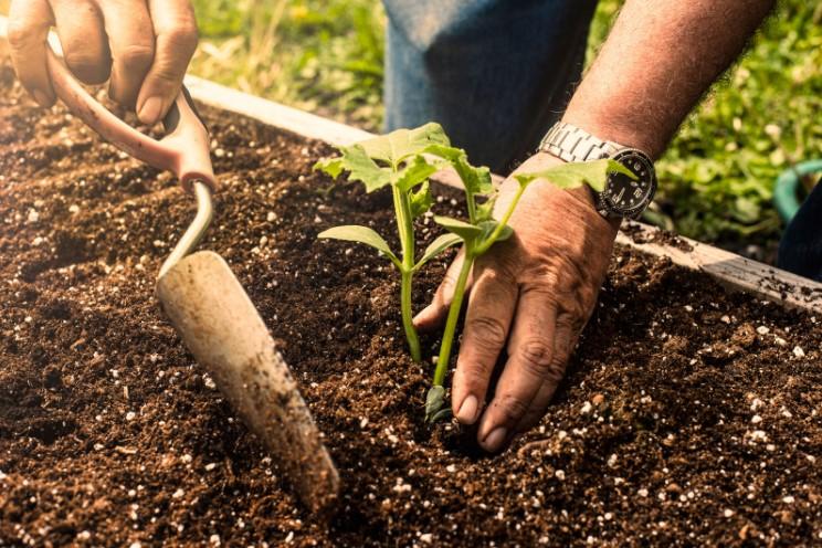 Easy control soil in raised bed garden