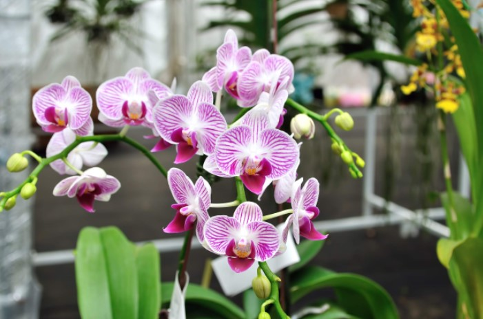 Light Requirements for Orchids
