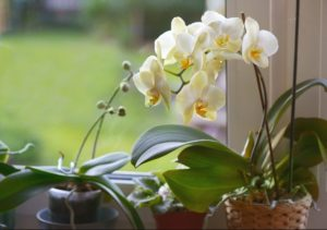 9 Easy Ways How to Care for Orchids Indoors