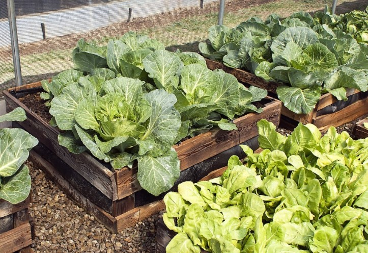 Top 10 Benefits of Raised Bed Gardening