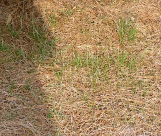 Straw for Lawn