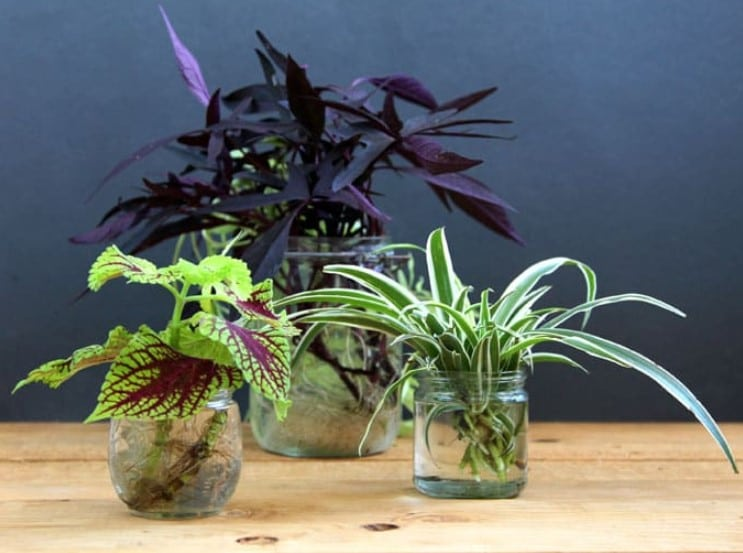 Tips for Growing Plants in Water