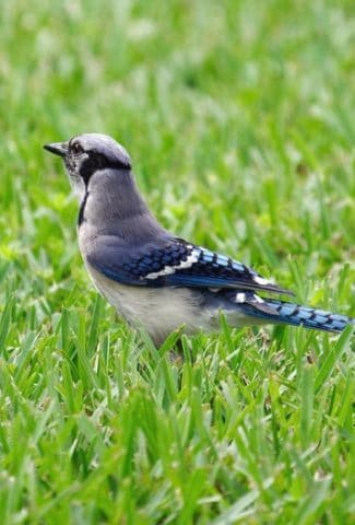 How to Keep Birds from Eating Grass Seed – 10 Easy Tips