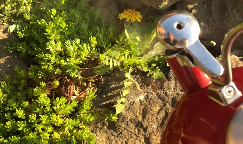 Using boiling water to kill weeds