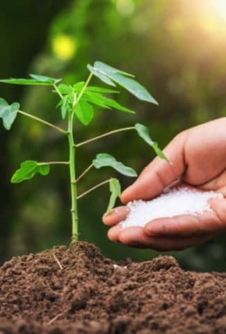 Synthetic Vs Organic Fertilizer: What Fertilizer Should You Choose?