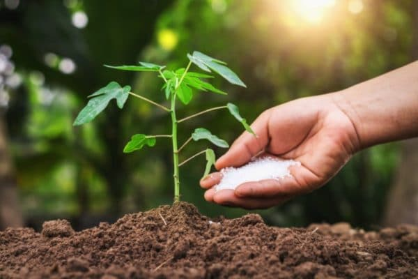 Synthetic Vs Organic Fertilizer: What Fertilizer Should You Choose?