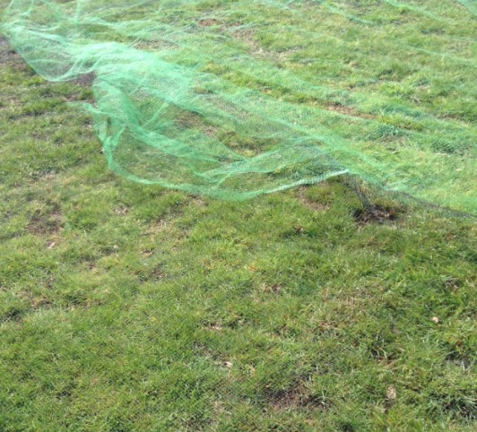 Lawn netting