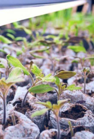How Much Light Do Seedlings Need