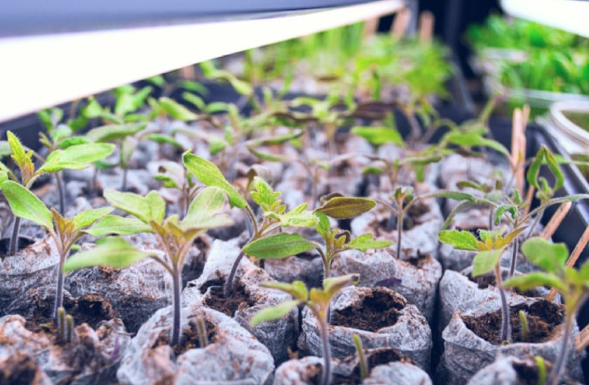 How Much Light Do Seedlings Need?