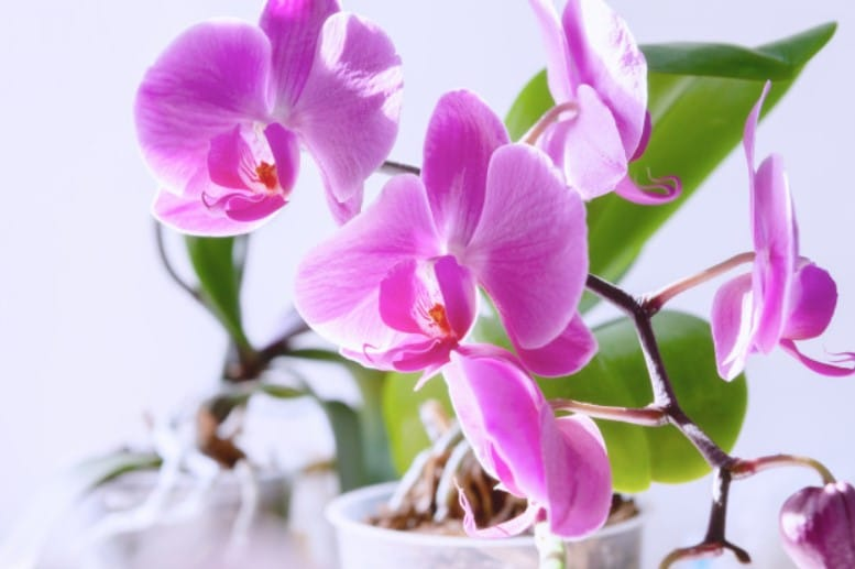 Care when Orchid bloom