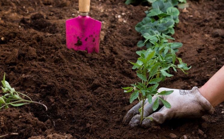 plant vegetable garden