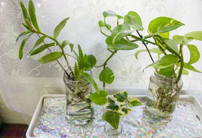 15 Plants That Grow in Water without Soil