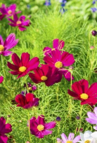 15 Easiest Flowers to Grow from Seed
