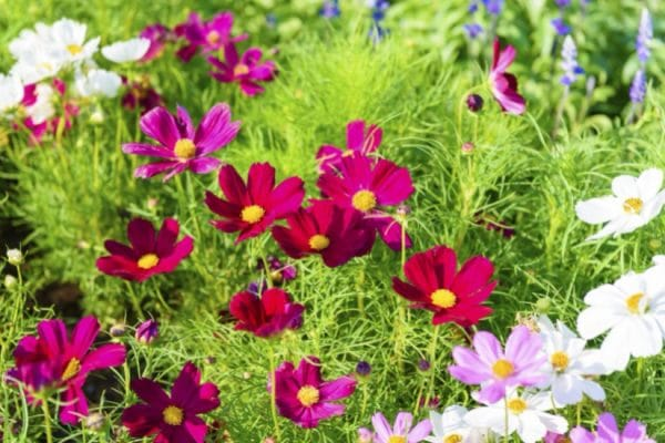 Easiest Flowers to Grow from Seed