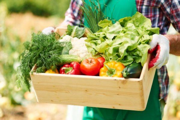 Top 10 Fast Growing Vegetables in Pots