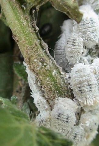 How to Get Rid of Little White Bugs on Plants