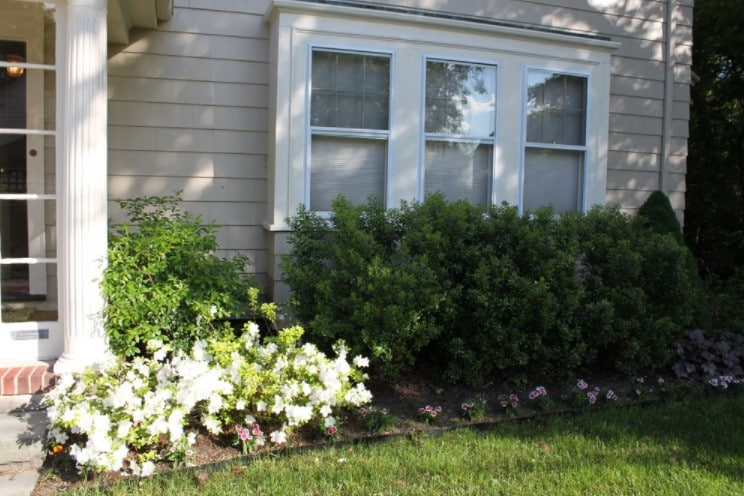 Shade plants by house