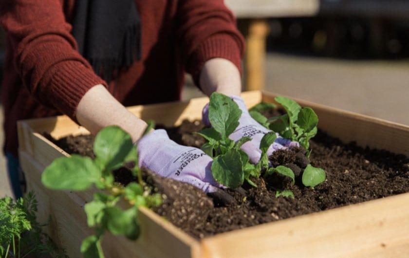 Using the soil for planter box